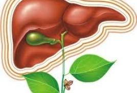 болезни печени и желчного пузыря